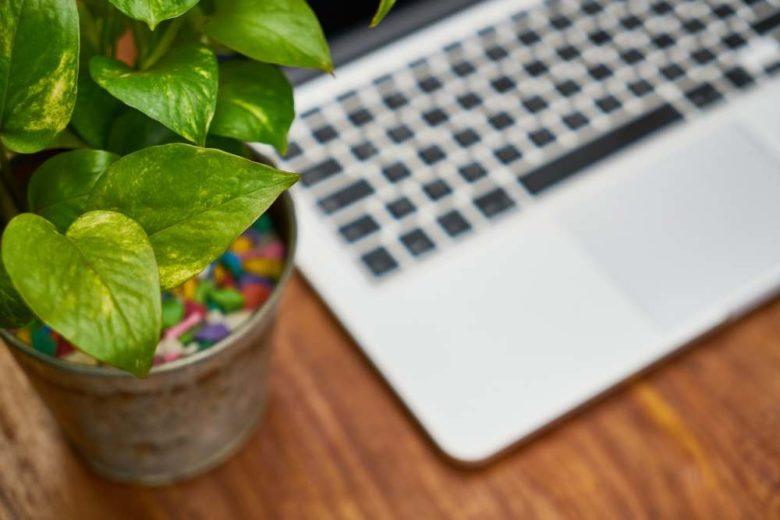 piante e computer su scrivania