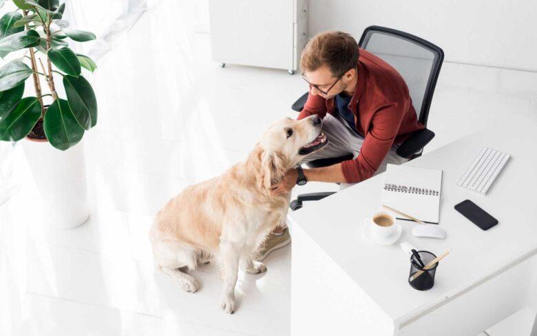 cane in ufficio con padrone che lo accarezza dalla scrivania